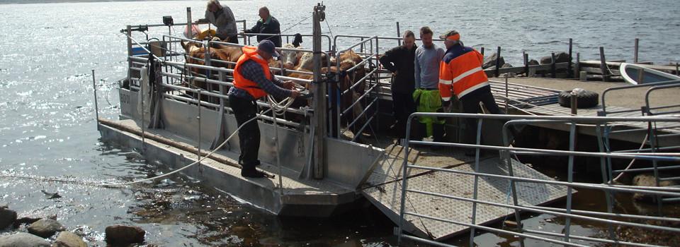 Djuren kommer till Järkö